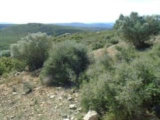 Otros en venta en Coves De Vinromà (les)